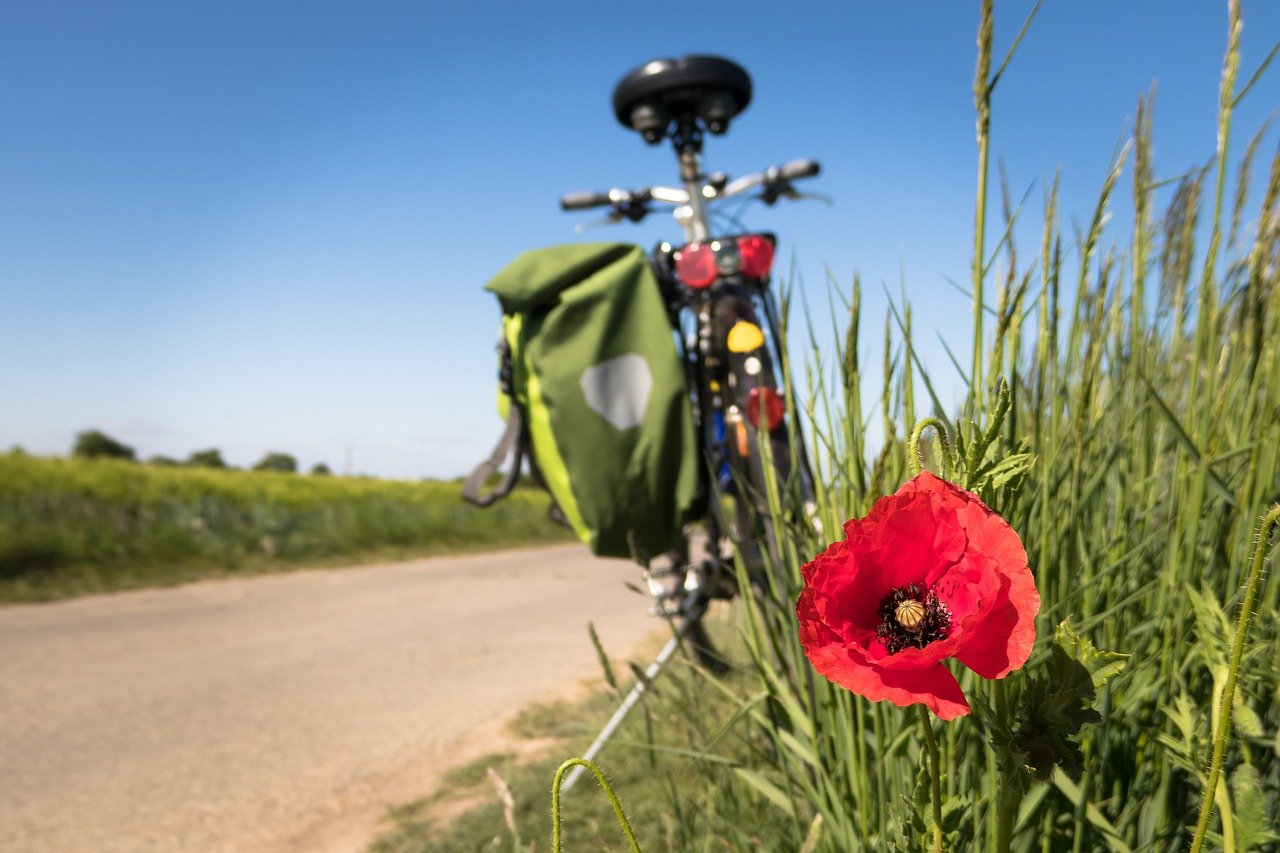 cycling, poppy, leisure