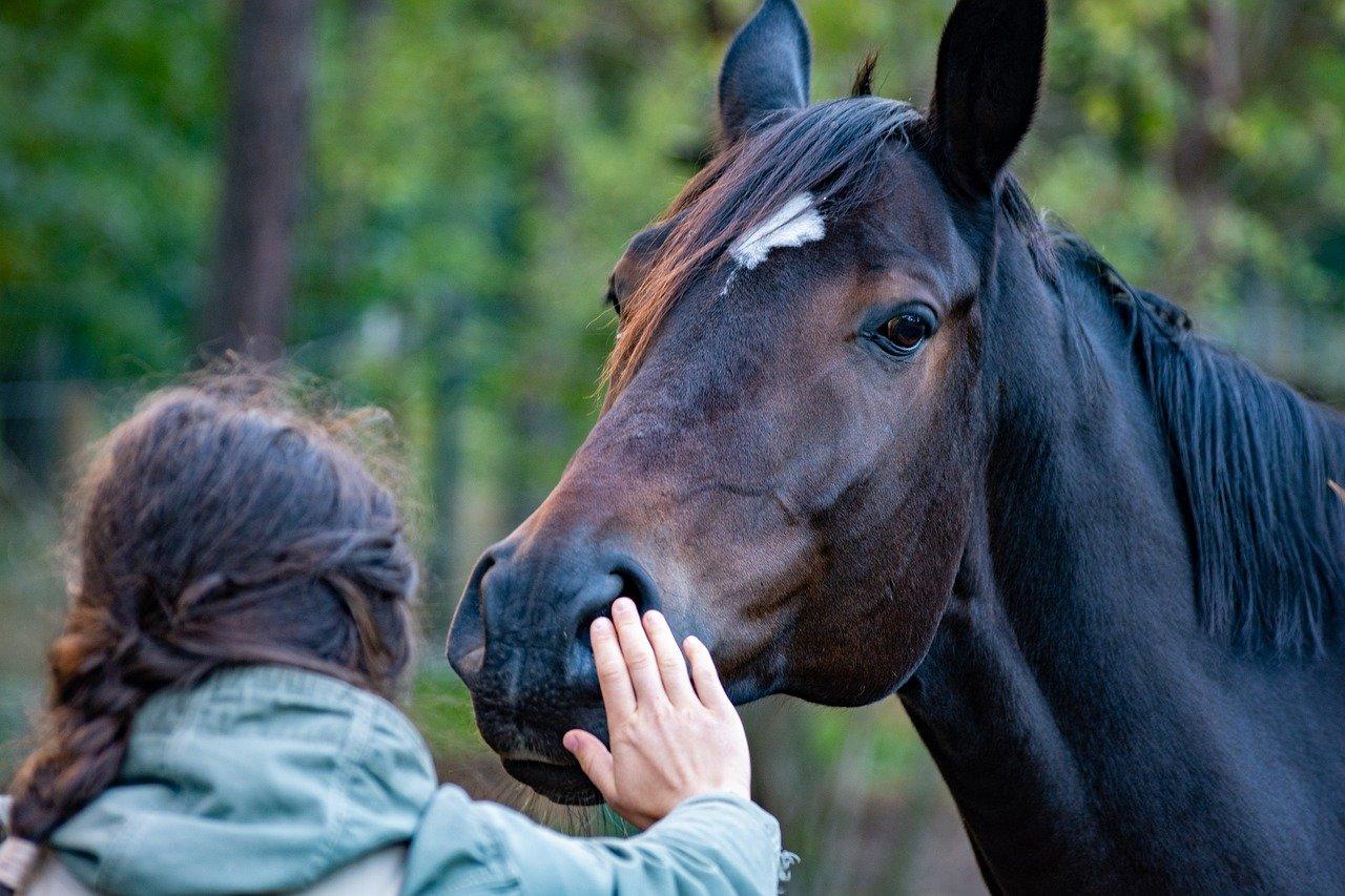horse, hand, friendship